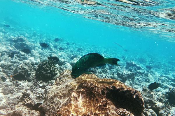 Большой Барьерный риф потерял 50% кораллов из-за изменений климата