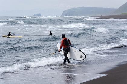 На Камчатке обнаружили еще несколько пляжей смертвыми животными инефтью